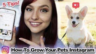 Ways to Grow an animal Instagram Bank account | 5 various Tips!