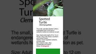 Discovered Turtle help Quick Instructions to Ontario' s Frogs for Instagram