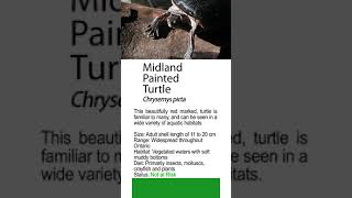 Handcrafted Turtle instruction Quick Courses to Ontario' s Frogs for Instagram